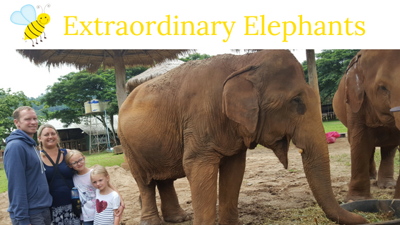 Extraordinary Elephants